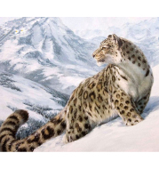 pictures by numbers diy snow leopard Home Decor Modular painting by numbers on canvas