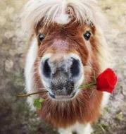 Zooya DIY diamante Bordado lindo animal alpaca y flores rojas Cuadros de punto de cruz ronda de perforación mosaico decoración cj1059