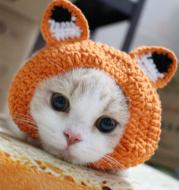 New cat dog hat handmade cartoon fox cat hat