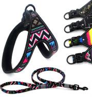 Colorful dog leash